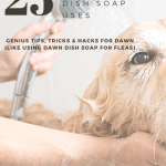 Golden retriever getting a bath with text reading 25 Blue Dawn Dish Soap Uses, Genius Tips, Tricks and Hacks for Dawn (Like Using Dawn Dish Soap for Fleas)