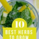 Mint leaves in ice water with lemon slices and text reading 10 Best Herbs to Grow in your Kitchen Garden