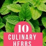 Mint leaves with text reading 10 Culinary Herbs for Your Kitchen Garden