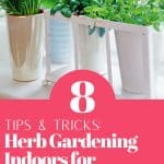 Herbs in containers by window with text reading 8 Tips and Tricks for Herb Gardening Indoors for Beginners
