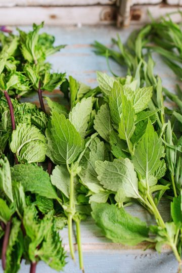 Freshly cut herbs in post How to Plant an Herb Garden