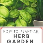 Fresh basil and chives in pots with text reading How to Plant an Herb Garden for Beginners