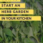 Freshly cut herbs on counter with text reading How to Start an Herb Garden in Your Kitchen